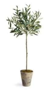 Olive Tree Interior Design